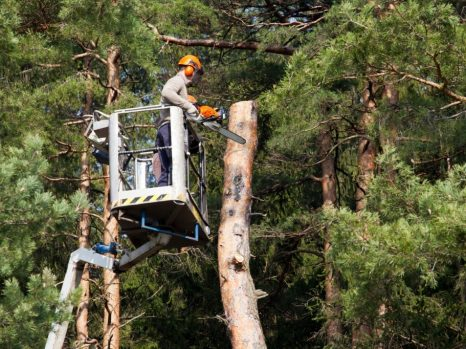 Orchard Park Tree Services